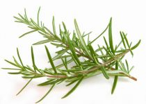 Rosemary - How to get rid of headaches