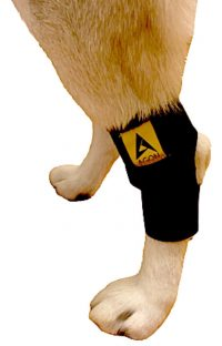 Agon Dog Canine Rear Leg Hock Joint Brace