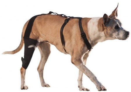 Canine Knee Brace 3.0 mm neoprene support sleeve