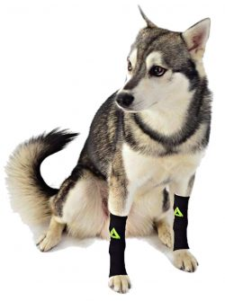 DOG Canine Pet Compression-Dog Leg Braces