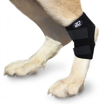 HJZ Dog Canine Rear Leg Hock Joint Protection Brace