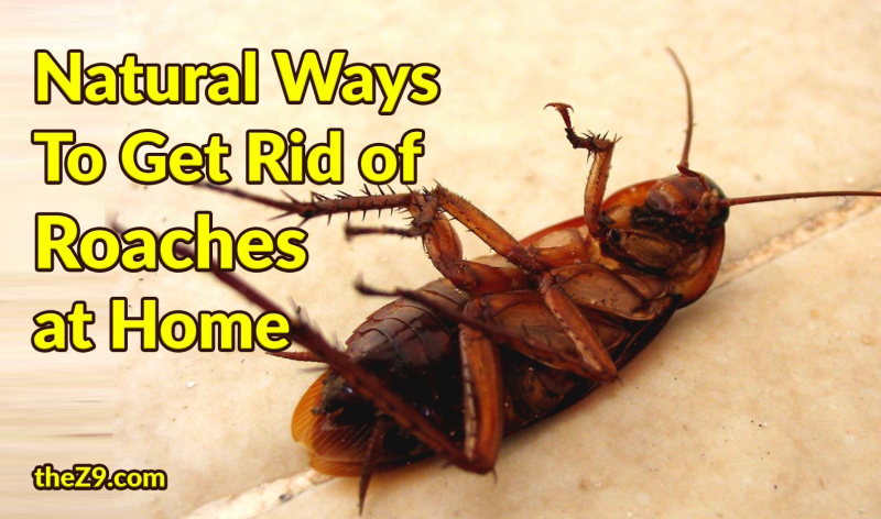 What Is A Natural Way To Get Rid Of Roaches
