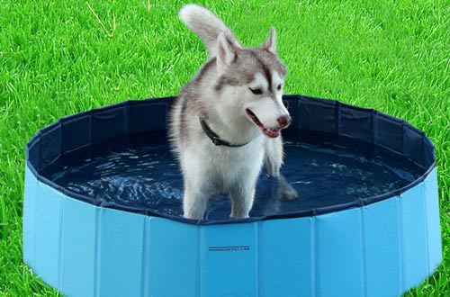 Outdoor Dog Cat Swimming Pool Playing Pond