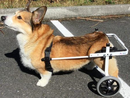 K9-Carts-dog-wheelchairs