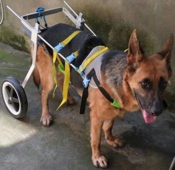 Newlife-Mobility-dog-wheelchairs