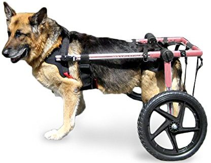 Walkin' Wheels-Dog Wheelchairs